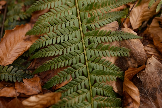 Detalhes da floresta capturados à luz do dia