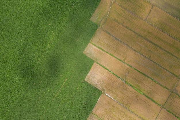 Detalhes de arquivo e linha de superfície da área de agricultura são campos de milho e campos de arroz de vista aérea de agricultor