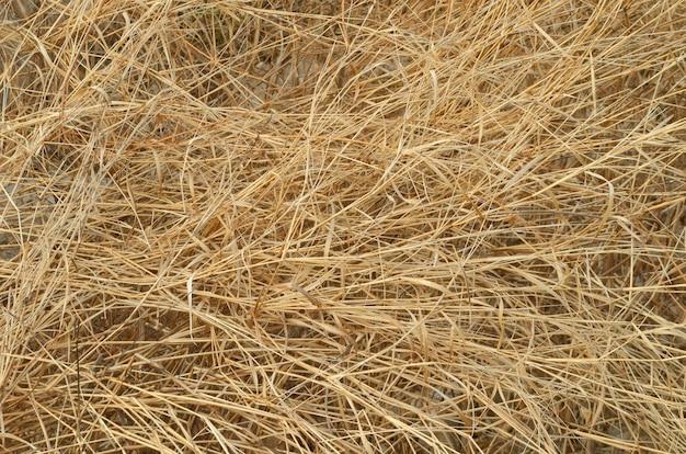 Detalhes de grama seca