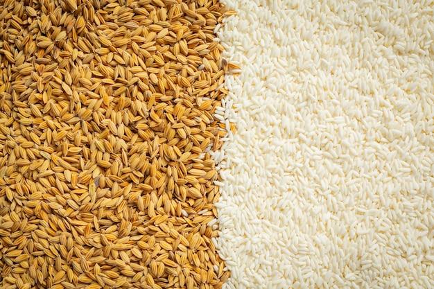 Detalhes de papel de parede de arroz em casca e arroz branco