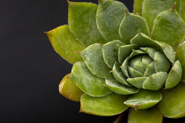 Detalhes de texturas de plantas de interior