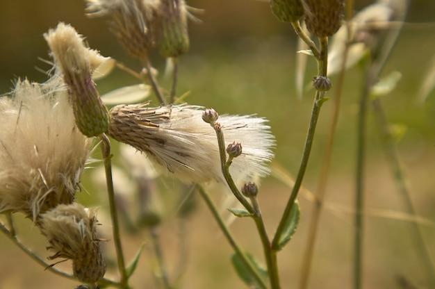 Detalhes dos filamentos brancos em seu período de polinização após a floração.