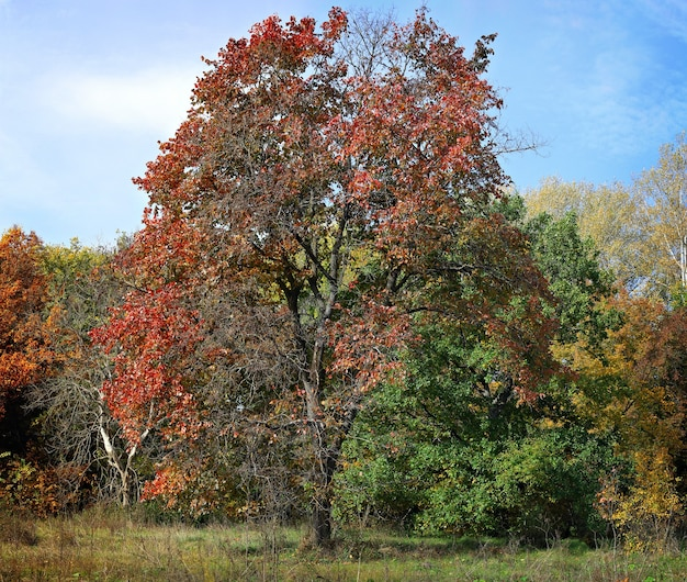 Dia da floresta de outono.