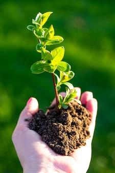 Dia da terra. rebento de uma árvore em uma mão feminina em um fundo de grama. conceito de conservação da floresta. dia mundial do meio ambiente.