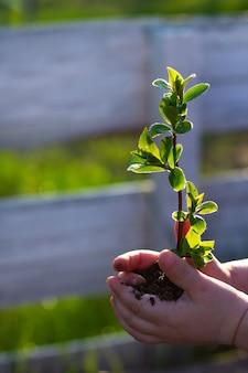 Dia da terra. rebento de uma árvore nas mãos de uma criança em um fundo de grama. conceito de conservação da floresta. dia mundial do meio ambiente