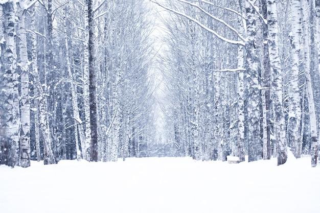 Dia de inverno com neve em um lindo na orla da floresta