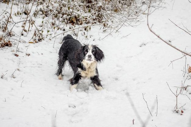 Dia de inverno, em um caminho na floresta - um cachorrinho olha para a frente_