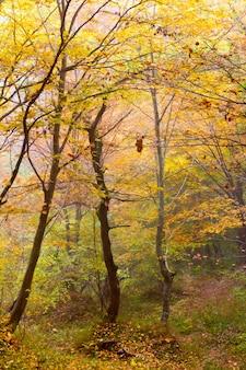 Dia de neblina em uma floresta colorida de outono