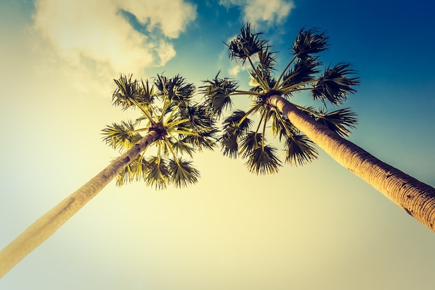 Dia de verão instagram miami do vintage