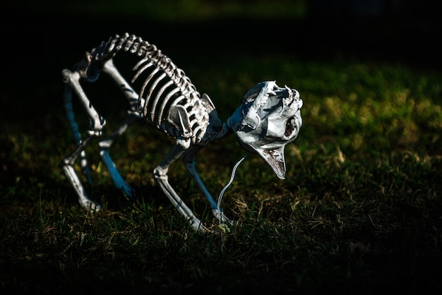 Dia dos mortos, halloween ou dia. fundo de halloween. esqueleto de halloween de um cão ou gato assustador.