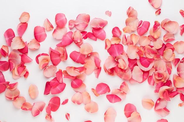 Dia dos namorados. pétalas de flores rosa em branco.
