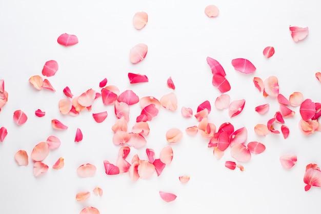 Dia dos namorados. pétalas de flores rosa em fundo branco. plano de fundo dia dos namorados. camada plana, vista superior, espaço de cópia.
