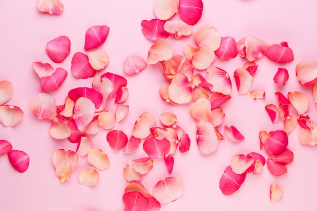 Dia dos namorados. pétalas de flores rosa em fundo branco. plano de fundo dia dos namorados. camada plana, vista superior.