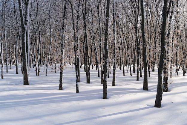 Dia ensolarado da floresta de inverno no parque