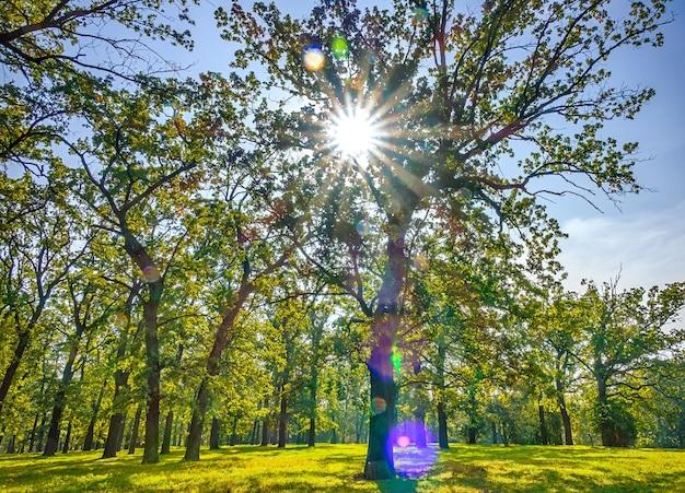 Dia quente sem nuvens em um parque vazio. os raios do sol abrem caminho pela folhagem