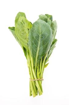 Dieta branco jardim saudável cru