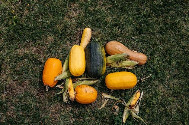 Diferentes abóboras e milho na grama verde colheita sazonal de outono