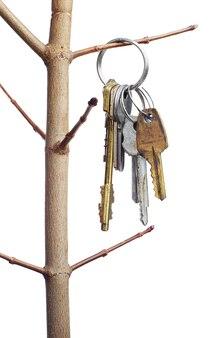 Diferentes chaves antigas em um galho de árvore isolado no branco