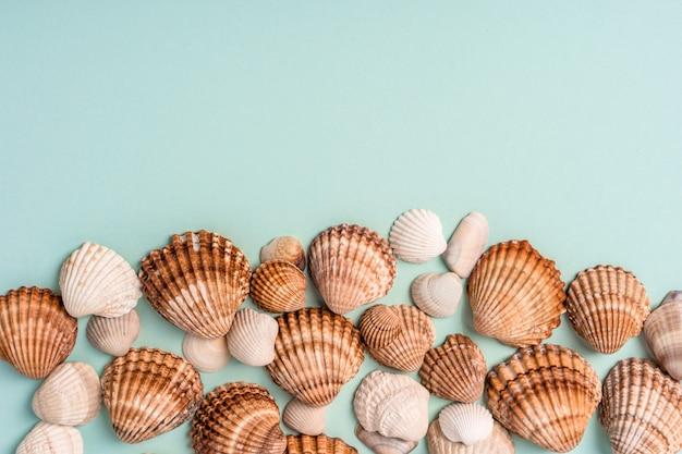 Diferentes conchas em um fundo azul, lugar para texto