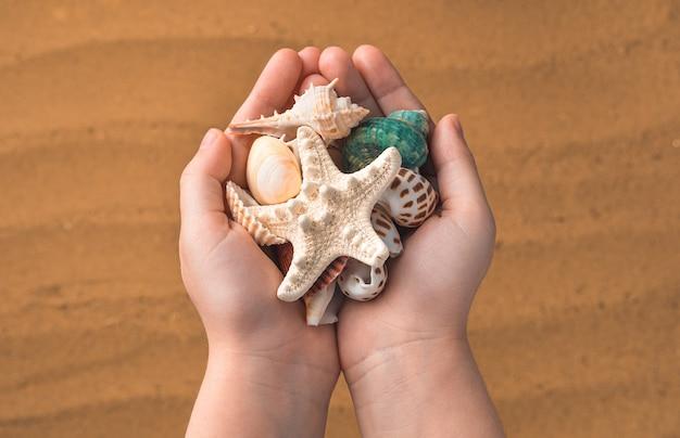 Diferentes conchas nas mãos de uma criança na areia da praia. vista do topo.