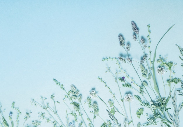 Diferentes flores silvestres em fundo de papel azul