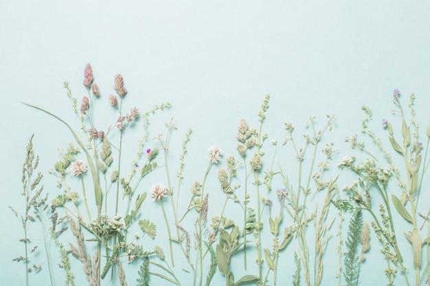Diferentes flores silvestres em fundo de papel