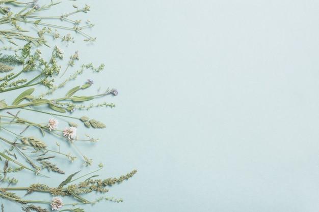 Diferentes flores silvestres na superfície do papel