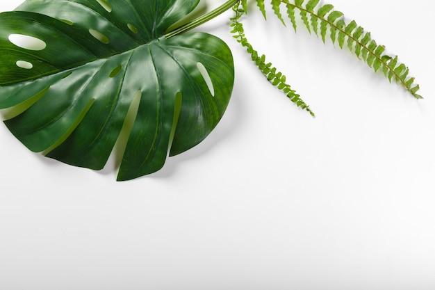 Diferentes folhas tropicais em fundo branco