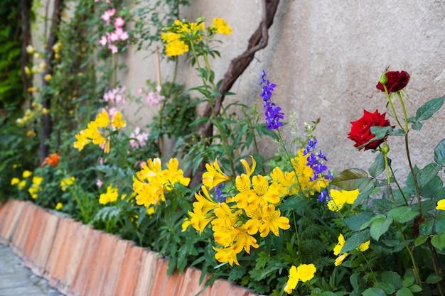 Diferentes plantas com flores em um aconchegante pátio com jardim