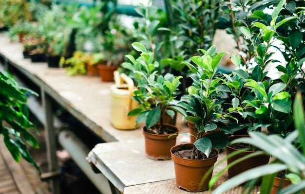 Diferentes plantas exóticas em vasos em um estande em um jardim botânico.