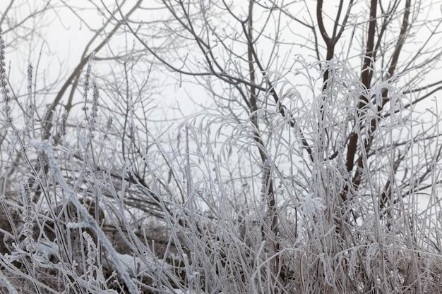 Diferentes raças de árvores decíduas sem folhagem nas árvores da temporada de inverno cobertas de neve na popa