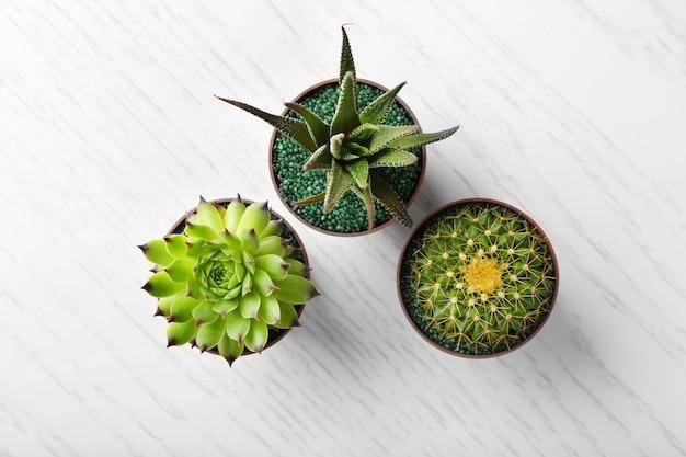 Diferentes suculentas e cactos em vasos na mesa de madeira clara
