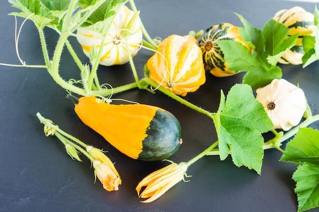 Diferentes tipos de abóboras decorativas na composição de outono.