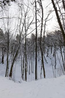 Diferentes tipos de árvores decíduas nuas sem folhagem