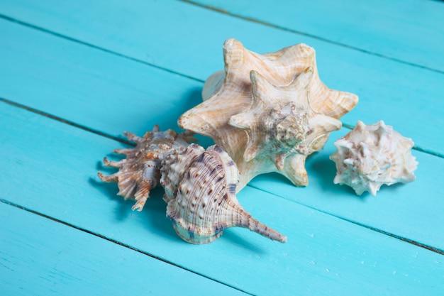 Diferentes tipos de conchas fechem azul de madeira