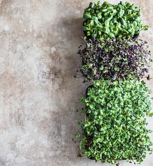 Diferentes tipos de micro-verdes em bandejas germinação de sementes em casa