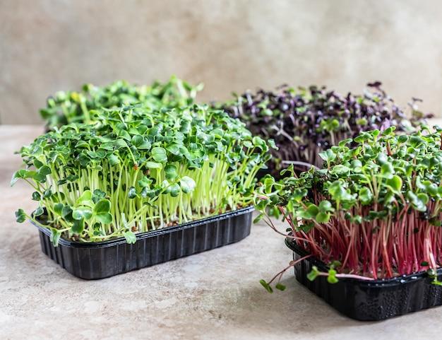 Diferentes tipos de micro-verduras em bandejas conceito de alimentação vegana e saudável microgreens crus orgânicos
