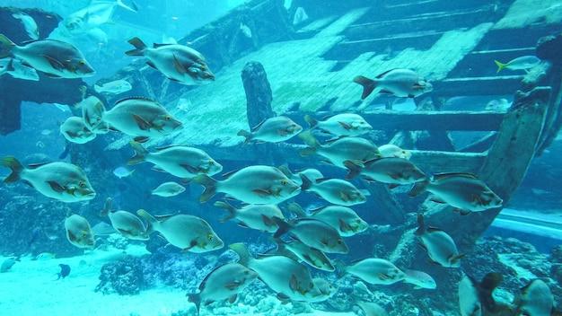 Diferentes tipos de peixes flutuando e grandes navios afundados de madeira