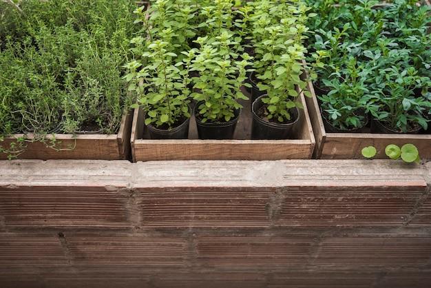 Diferentes tipos de vasos de plantas que crescem em estufa