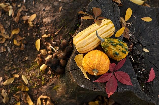 Diferentes variedades de abóboras estão no tronco. legumes coloridos. vista do topo.