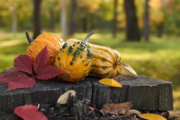 Diferentes variedades de abóboras estão no tronco. legumes coloridos.