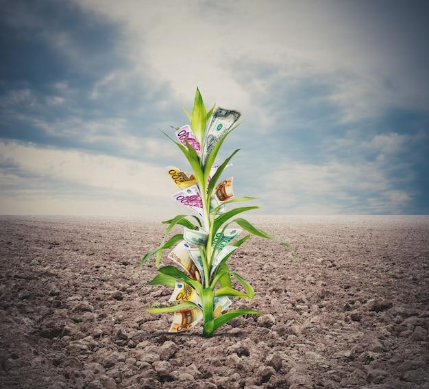 Dinheiro crescendo em uma planta através das folhas