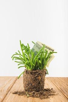 Dinheiro de papel na planta na mesa de madeira