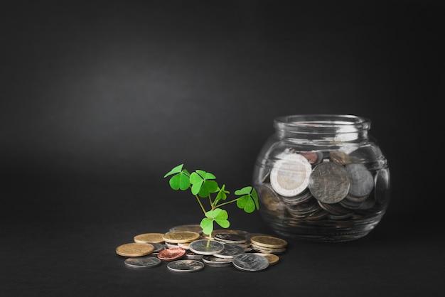 Dinheiro e sprout crescendo em cofrinho de vidro