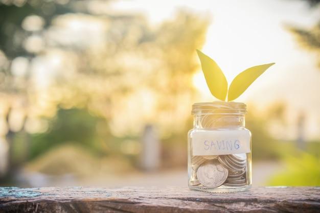 Dinheiro em frasco de vidro com uma planta dentro