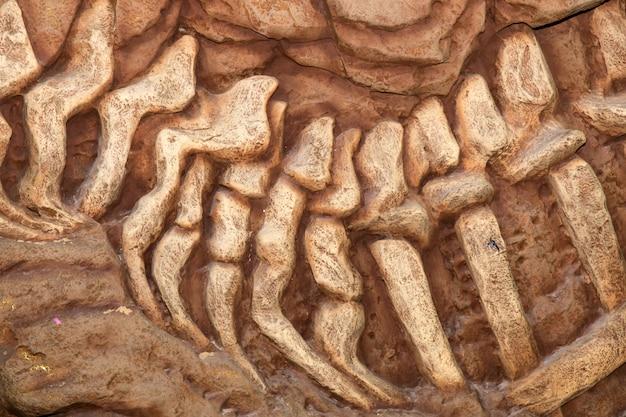 Dinossauro, fóssil