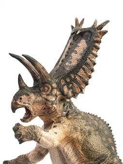 Dinossauro pentaceratops em fundo branco