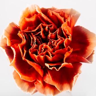 Diretamente acima da flor de cravos vermelhos