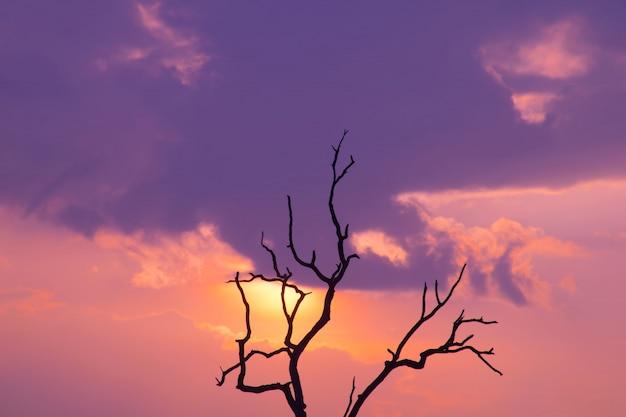 Do sol nascer do sol com lindo céu no verão.