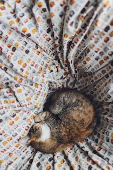 Doce gato dourado deitado no sofá e olhando para longe.